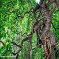 عکس علیرضا افتخاری - آلبوم امان از جدایی-حرم