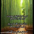 عکس علیرضا قربانی - راز دل(همراه با متن)